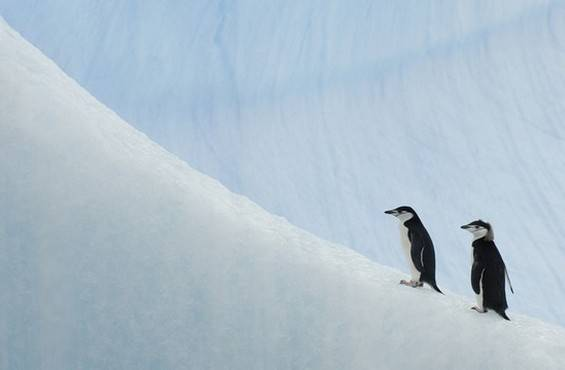 Cruising the Antarctic Peninsula