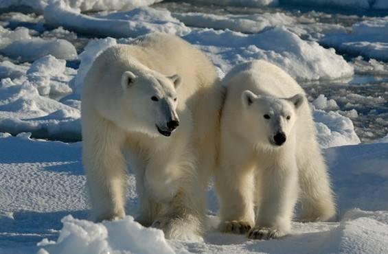 Exploring Spitsbergen